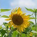 Sunny July 2013 by Maria Urso