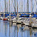 Sunny Marina by Kate Brown