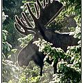 Sunny Moose by Darlene Grubbs
