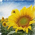Sunny Morning by Anita Hubbard