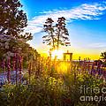 Sunny Morning by Joe Geraci