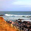 Sunny Ocean Shoreline by Elaine Plesser