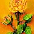 Sunny Rose by Zina Stromberg