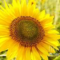 Sunny Side Up by Terri Morris