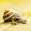 Sunny Snail by Daniel Daniel