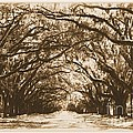 Sunny Southern Day With Old World Framing by Carol Groenen
