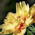 Sunny Summer by Susan Herber