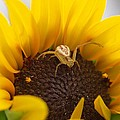 Sunny The Spider by HW Kateley