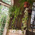Sunny Window by Elin Mastrangelo