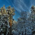 Sunny Winter Day by Nina Ficur Feenan