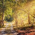 Sunray In The Autumn Forest by Alain De Maximy