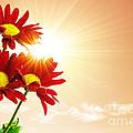 Sunrays Flowers by Carlos Caetano