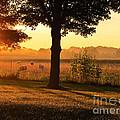 Sunrise 365 13 by Tina M Wenger