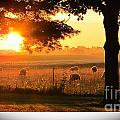 Sunrise 365 15 by Tina M Wenger