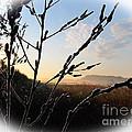 Sunrise 365 2 by Tina M Wenger