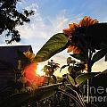 Sunrise 365 29 by Tina M Wenger