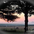 Sunrise 365 35 by Tina M Wenger