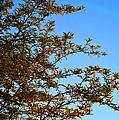 Sunrise by Alys Caviness-Gober