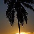 Sunrise And Palm Tree by Paul Wilford