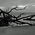 Sunrise At Driftwood Beach Bw by Bruce Gourley
