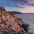 Sunrise At Otter Cliffs In Acadia  by Susan Cole Kelly