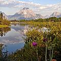 Sunrise At Oxbow Bend 5 by Marty Koch