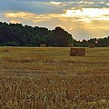 Sunrise At The Wheat Field by Ray Sheley