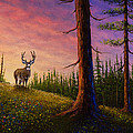 Sunrise Buck by Chris Steele