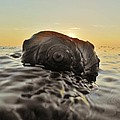 Sunrise Conch 9 10/3 by Mark Lemmon