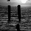Sunrise Descent Bw - Outer Banks Ocracoke by Dan Carmichael