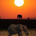 Sunrise Elephants by John Hebb