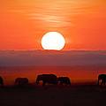 Sunrise Elephants by Naoki Takyo
