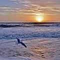 Sunrise Flight by Kim Bemis