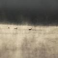Sunrise Geese by Melissa Petrey