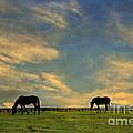 Sunrise Graze by Darren Fisher