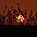 Sunrise In South Texas by Daniel Alcocer