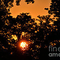 Sunrise In The Forest by Thomas Woolworth