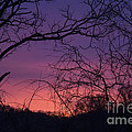 Sunrise January 21 2012 by Teresa Mucha
