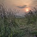 Sunrise Landscape In Summer Looking Through Wild Thistles And Gr by Matthew Gibson