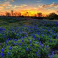 Sunrise by Mark Alder