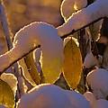 Sunrise On Autumn Snow by Dan Sproul