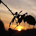 Sunrise On Cold Morning by Carl De B