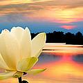 Sunrise On Lotus Lillie by Randall Branham