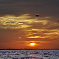 Sunrise On Tampa Bay by Bill Cannon