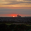 Sunrise On The Cotton Field by Debbie Portwood