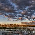 Sunrise On Yellowstone Lake by Sandra Bronstein