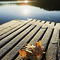 Sunrise Over Leaf On Floating Dock In by Yves Marcoux