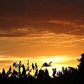 Sunrise Over The Milo Field by PainterArtist FIN