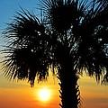 Sunrise  Palm Tree by Kathy Baccari