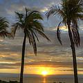 Sunrise Palms by Donna Doherty